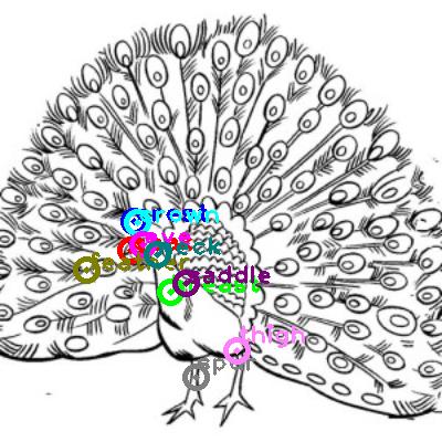 peacock_0017.png