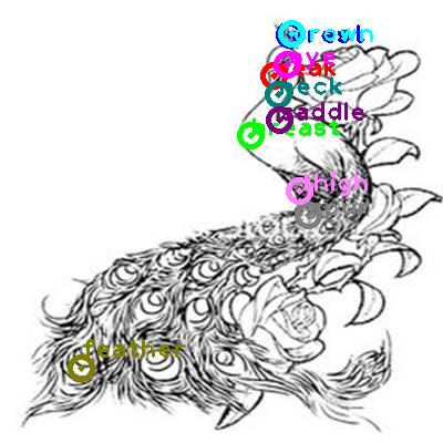 peacock_0019.png