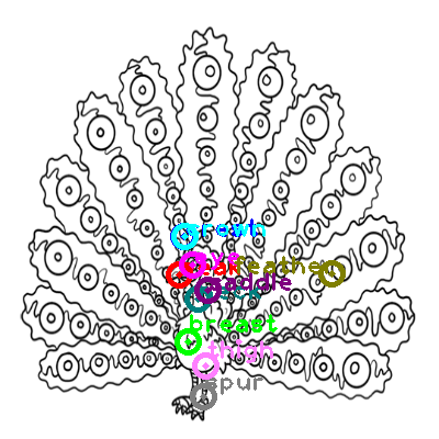 peacock_0024.png
