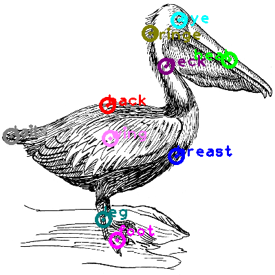 pelican_0002.png