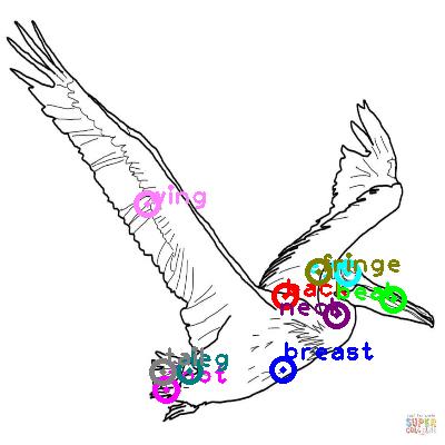 pelican_0007.png
