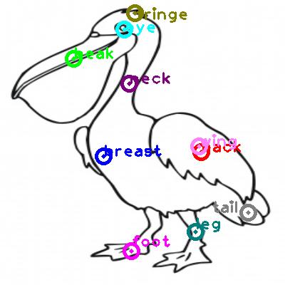 pelican_0014.png