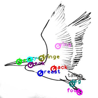 pelican_0017.png