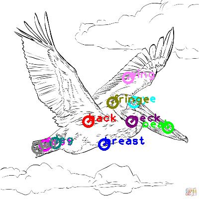 pelican_0019.png