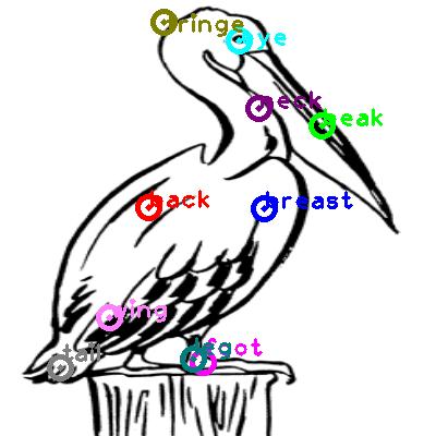 pelican_0024.png