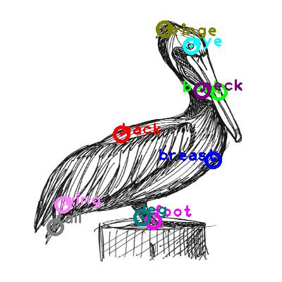 pelican_0029.png