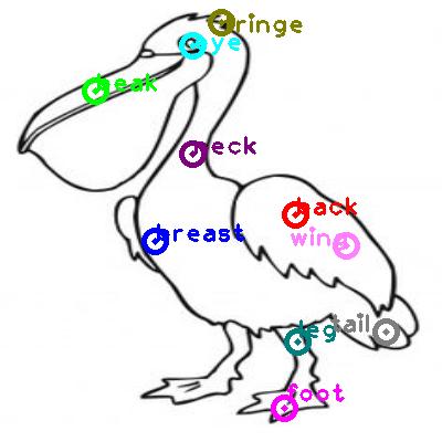pelican_0033.png