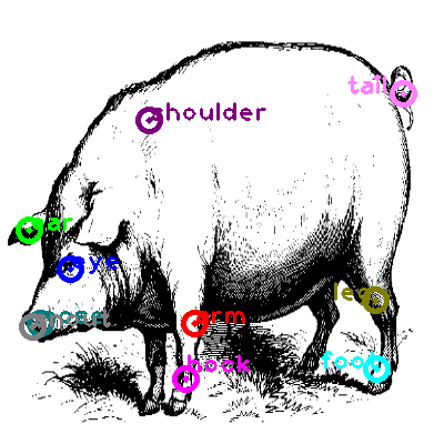 pig_0014.png