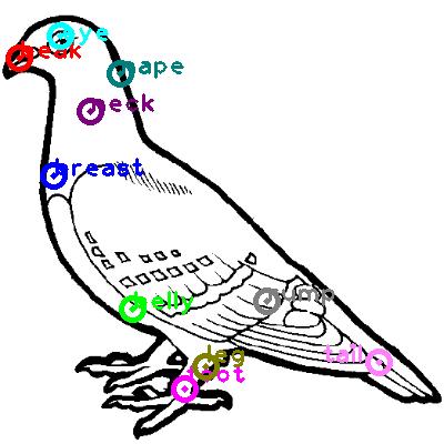pigeon_0001.png