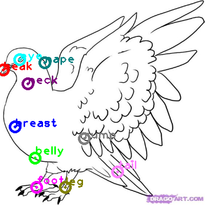 pigeon_0007.png