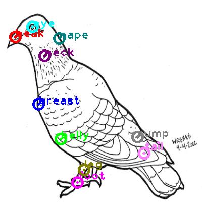 pigeon_0011.png