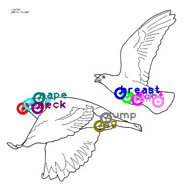 pigeon_0013.png