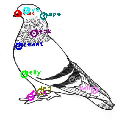 pigeon_0015.png