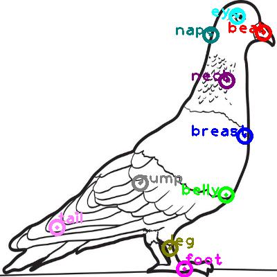 pigeon_0018.png