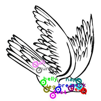 pigeon_0022.png