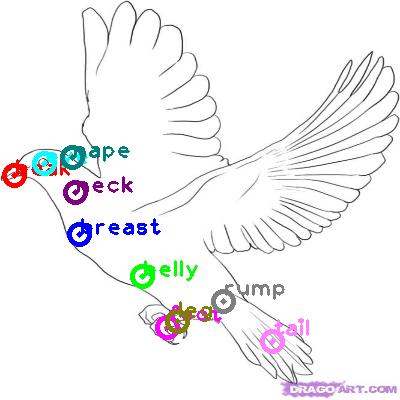 pigeon_0023.png
