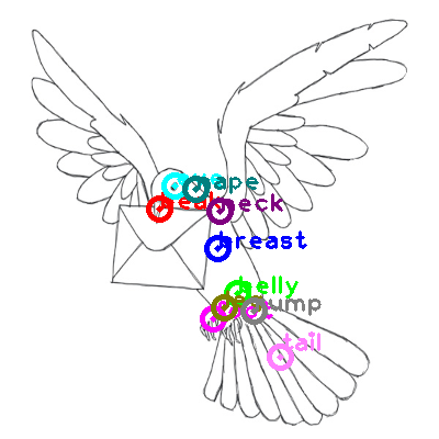pigeon_0031.png