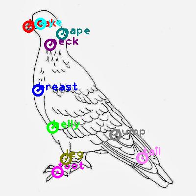 pigeon_0033.png