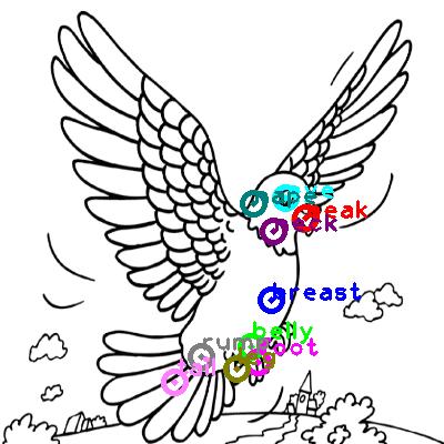 pigeon_0034.png
