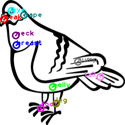 pigeon_0035.png