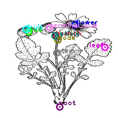 plants_0000.png