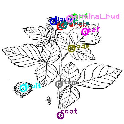 plants_0002.png