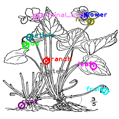 plants_0003.png