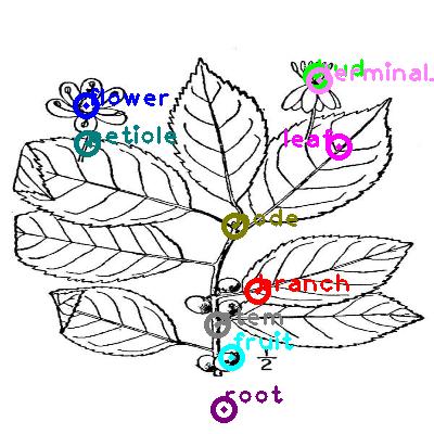 plants_0004.png