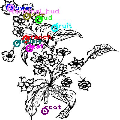 plants_0006.png