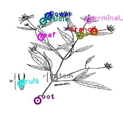 plants_0008.png