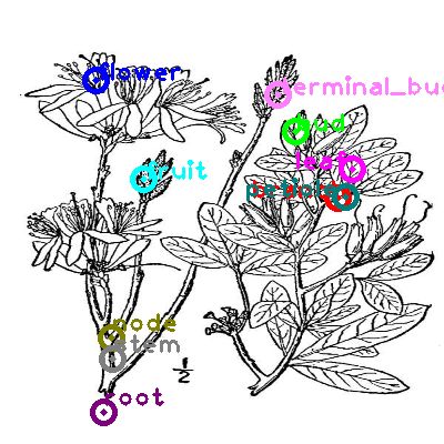 plants_0009.png