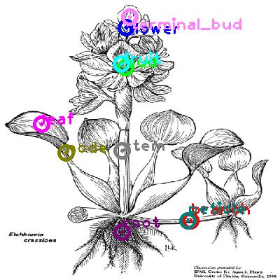 plants_0011.png