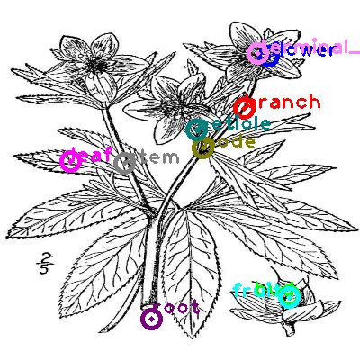 plants_0013.png