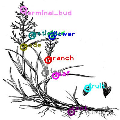 plants_0015.png