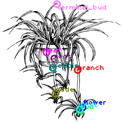 plants_0018.png