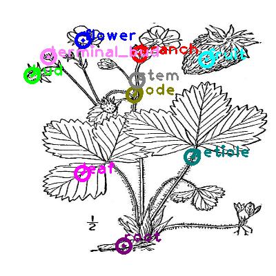 plants_0023.png