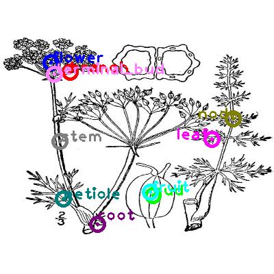 plants_0024.png