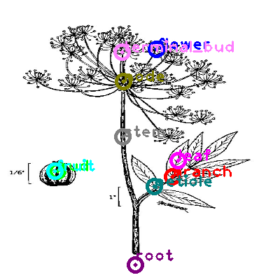 plants_0026.png