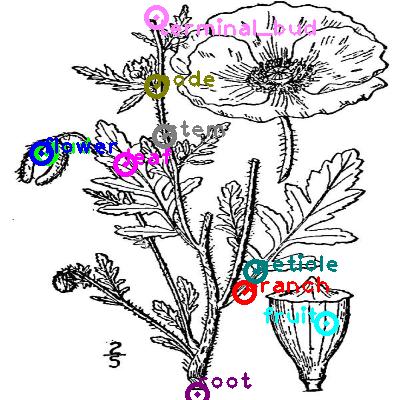 plants_0027.png