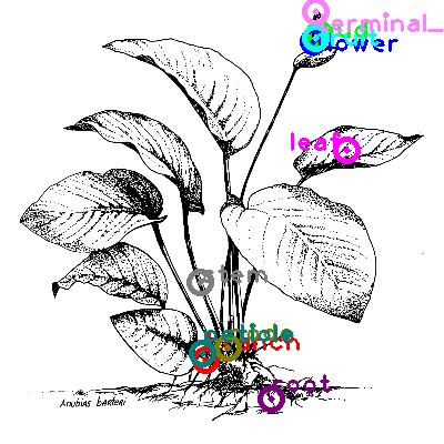 plants_0028.png