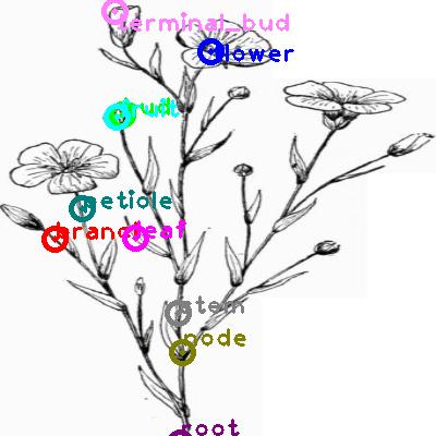 plants_0029.png