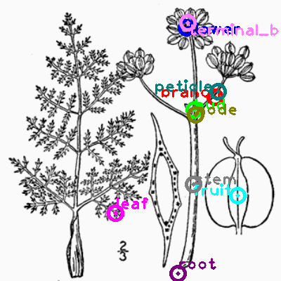 plants_0031.png