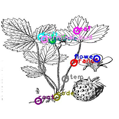 plants_0036.png