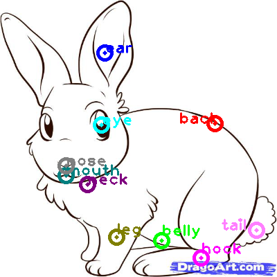rabbit_0012.png