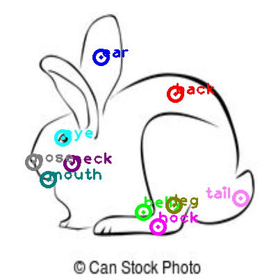 rabbit_0025.png