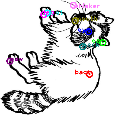 raccoon_0007.png
