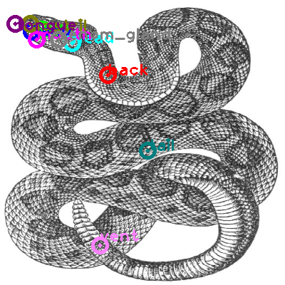 rattle-snake_0002.png