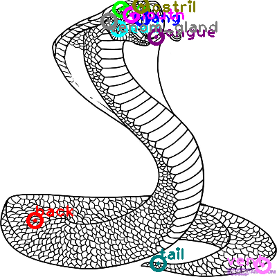 rattle-snake_0026.png