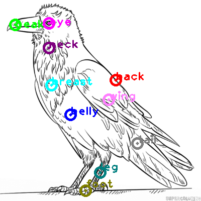 raven_0005.png