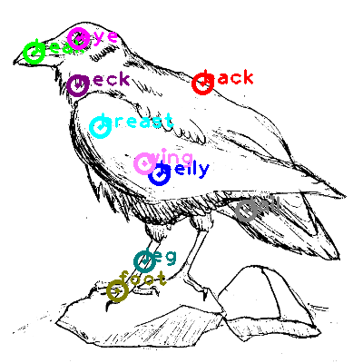 raven_0008.png